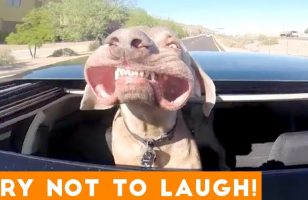 Try Not To Laugh Funniest Animal Compilation August 2018   Funny Pet Videos